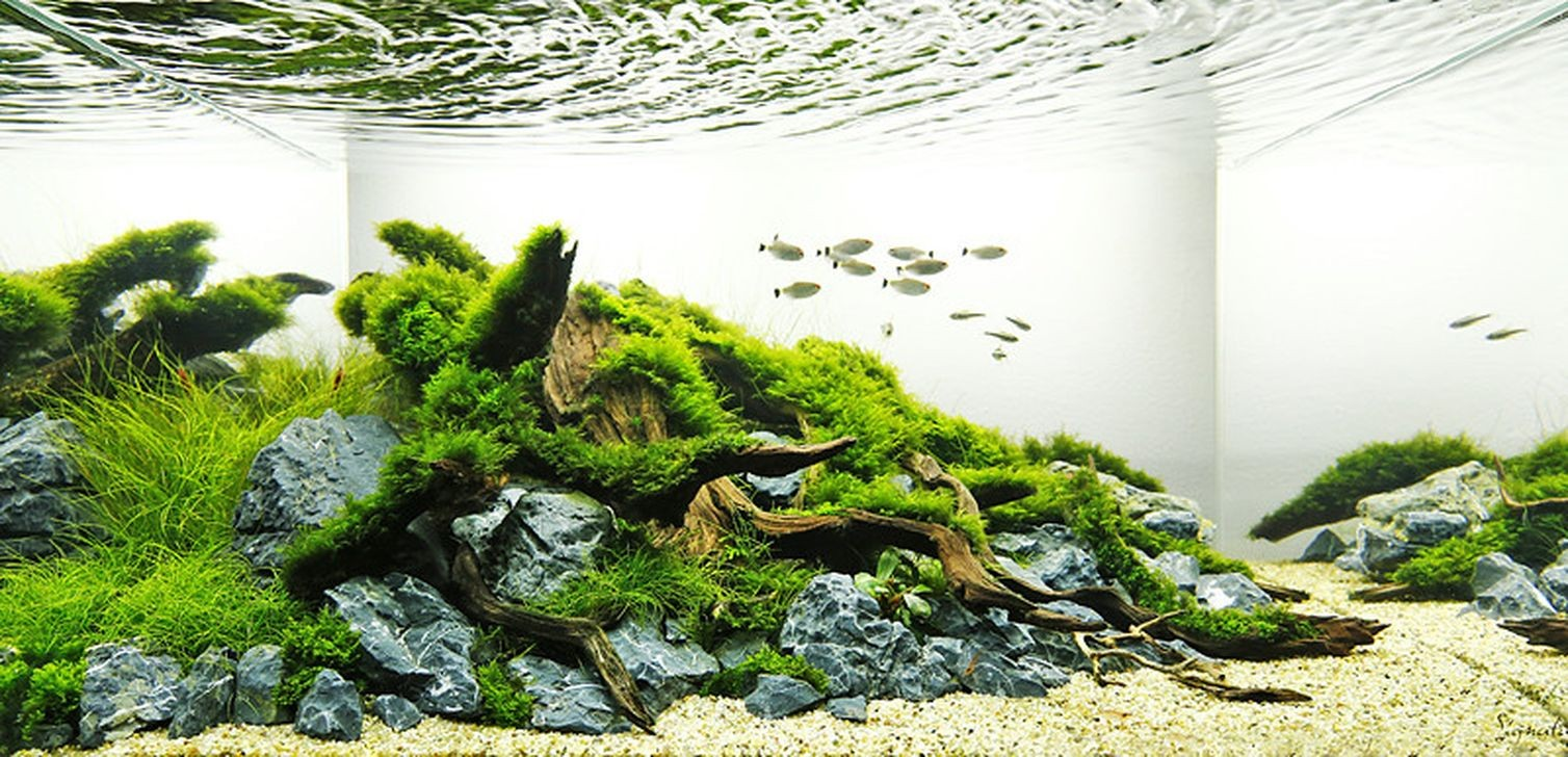 27+ Awesome Aquascaping Ideas You Will Totally Love - Page ...