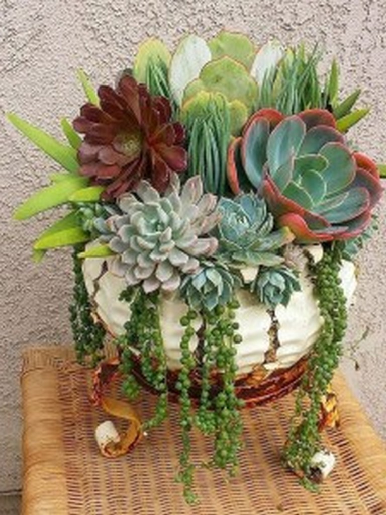 11 Awesome Indoor And Outdoor Succulent Plants Ideas For Your