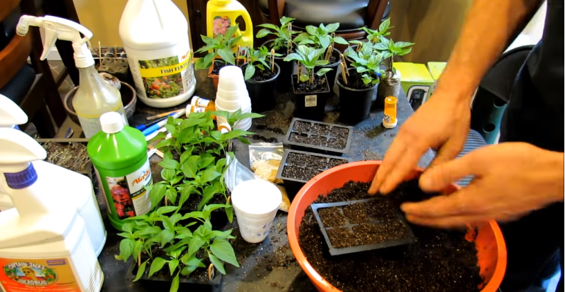 Preparation to Grow Peppers in Container
