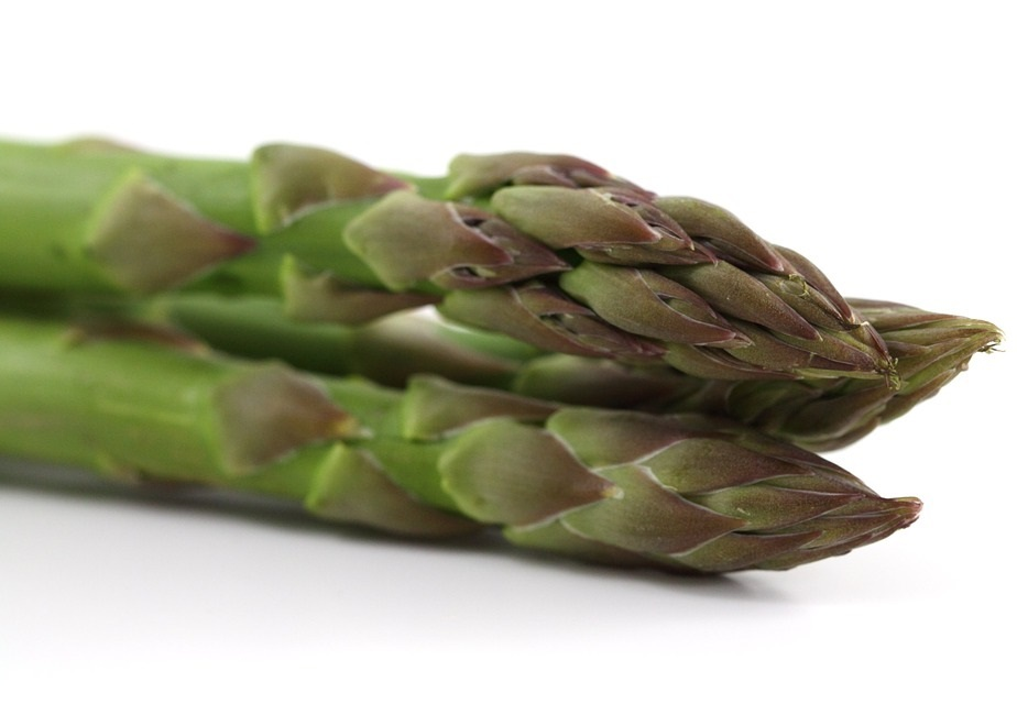 hydroponic asparagus