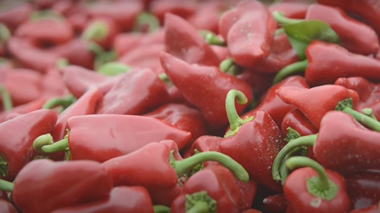 piquillo pepper