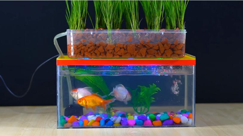 DIY Aquaponics Aquarium Projec