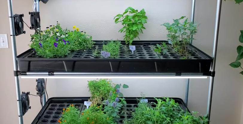DIY hydroponics indoors